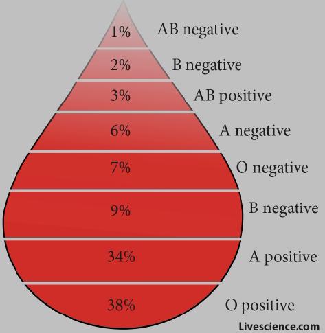 Key Club and NHS host blood drive