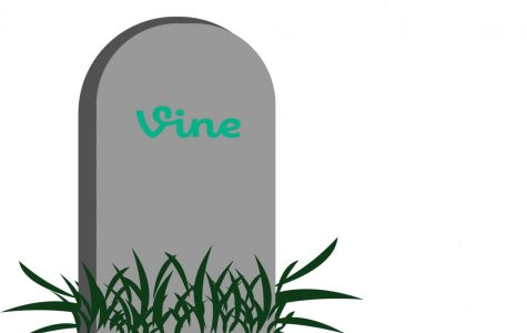 Mourning Vine one year later