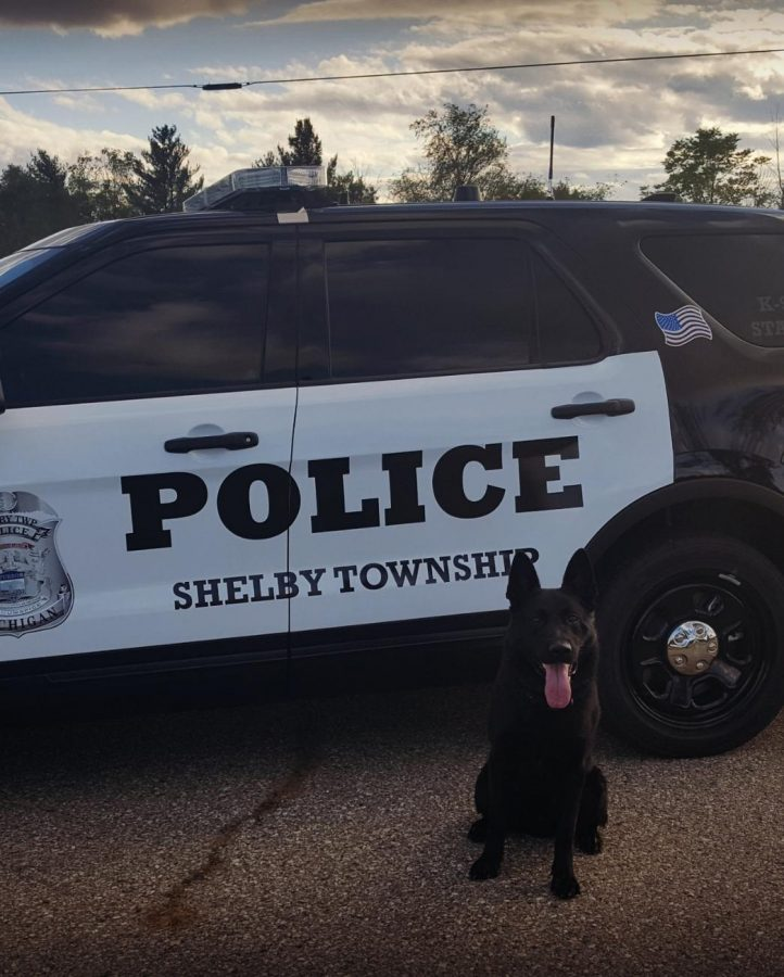 K9 Morpheus was one of two Shelby Township police dogs that searched school property Dec. 6. A total of nine dogs inspected the school.