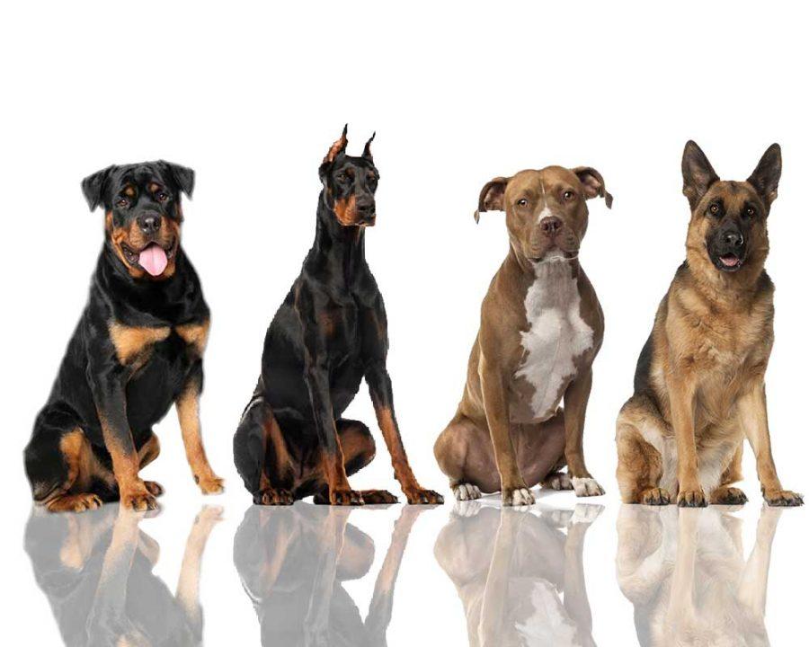 Most gentle dog breeds